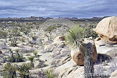 Southwestern USA desert scene
