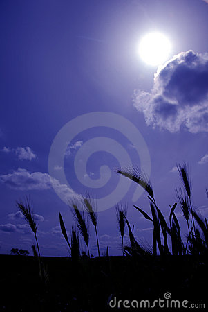 Free Sow Wild Oats On Blue Stock Photo - 2301000