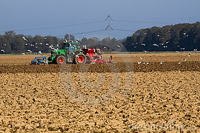 Sowing the field with tractor