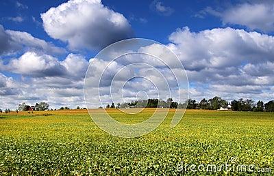 Soy bean fields