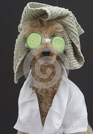 Spa Ready Dog