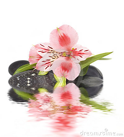 Spa still life with wild pink orchid