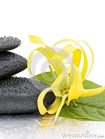 Free Spa Stones And Ylang-Ylang Flower Stock Photo - 16921770