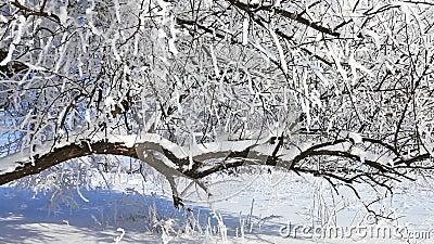 Spadający śnieg zimą zdjęcie wideo