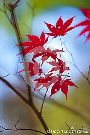 Spadek liść