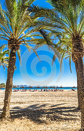 Free Spain Mallorca Beautiful Beach With Palm Trees At Alcudia. Royalty Free Stock Photography - 98859027