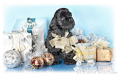 Spaniel puppy and gifts christmas