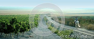 Spanish Horseback Rider surveys his Vineyards