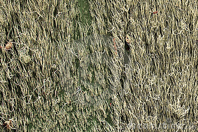 Spanish Moss on an Old Wall - Horizontal