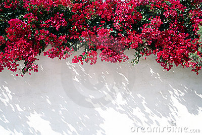 Spanish wall With flowers