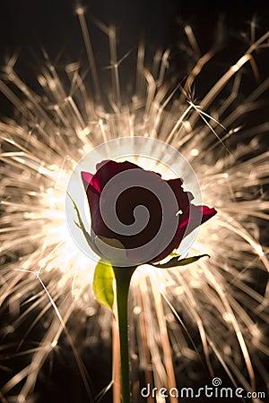 Free Sparkle Rose Stock Photos - 494343