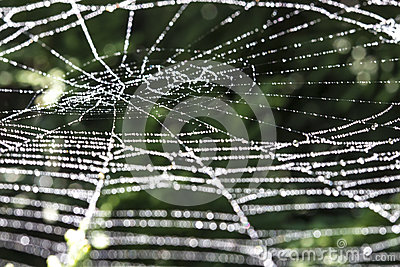 Sparkling spiderweb