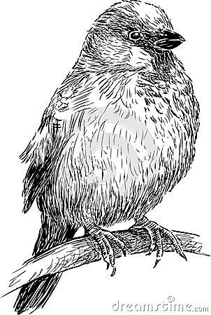 Free Sparrow Royalty Free Stock Image - 31201726