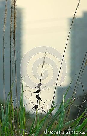 Free Sparrow Royalty Free Stock Image - 5485706