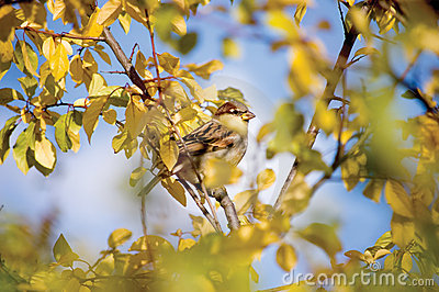 Sparrow Bird Autumn Hideout