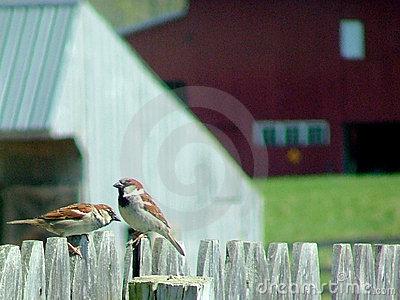 Sparrow chat