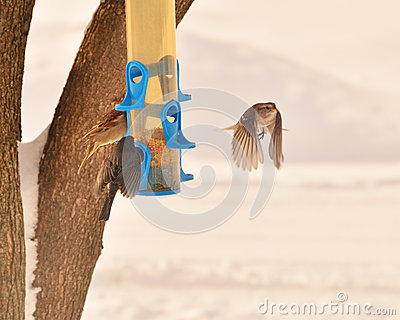 how to keep house sparrows away from bird feeders