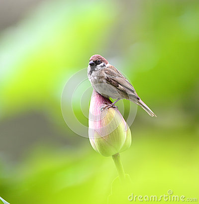 Sparrow Pond