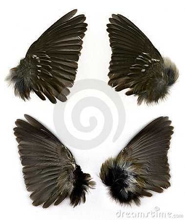 Sparrows wings