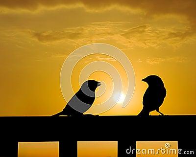 Sparrow small talk under sunset