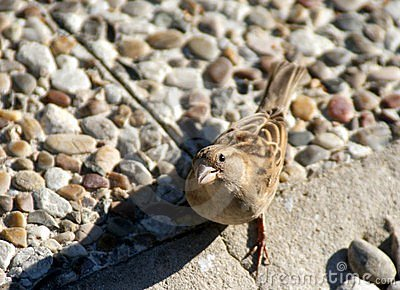 Sparrow staring up