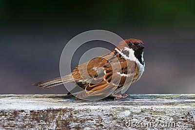 Sparrow take off