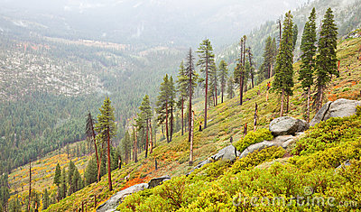 Sparse Yosemite Forest