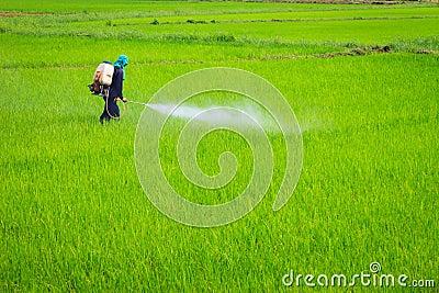 Spaying pesticide