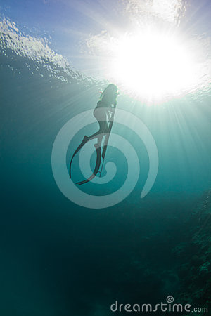 Free Spearfishing On The Reef Royalty Free Stock Photography - 24404387