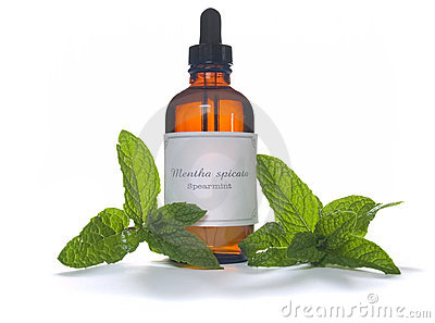 Spearmint extraction or essential oil