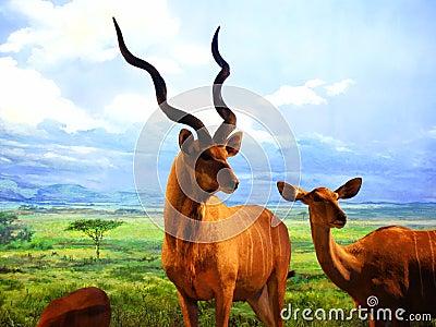 The specimens of  the Africa wild animals