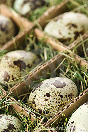 Speckled eggs.