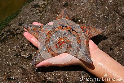 Speckled Starfish