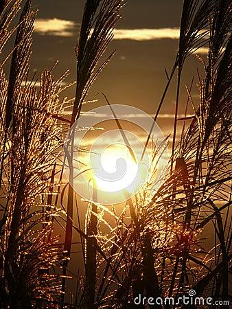 Free Spectacular Sunset Stock Photo - 4070100