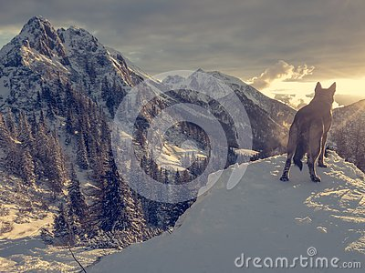 Spectacular winter mountain landscape illuminated by setting sun. Stock Photo