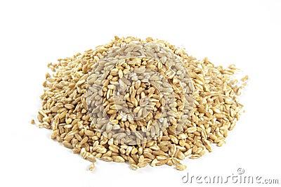 Spelt seeds on white