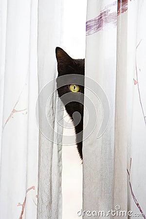 Spähen der Katze
