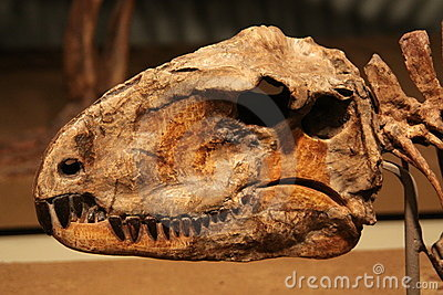 Sphenacodon Editorial Stock Photo