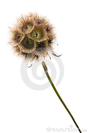 Free Sphere Flower Stock Photo - 4000140