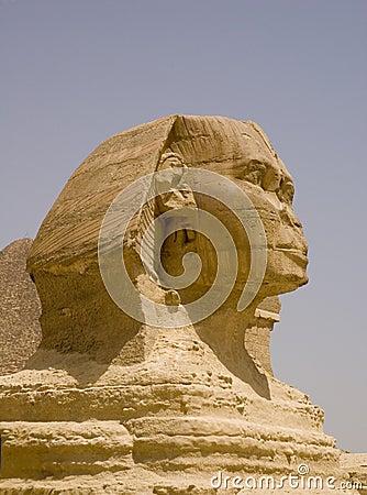 Sphynx egypt close up