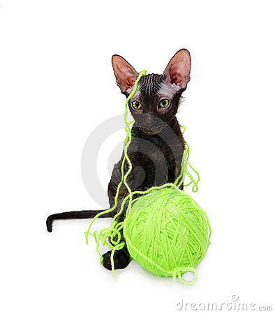 Sphynx kitten with a clew