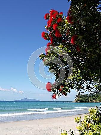 Spiaggia: Albero Di Fioritura Di Pohutukawa Fotografie Stock Libere da ...