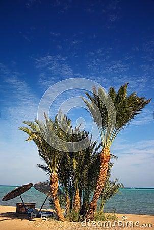 Spiaggia di paradiso della palma