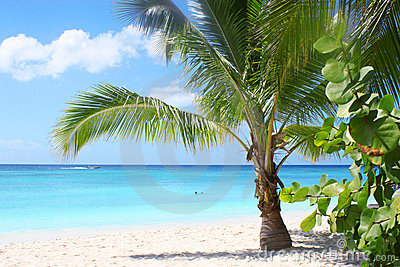 Spiaggia e baia tropicali