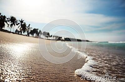 Spiaggia tropicale con dof