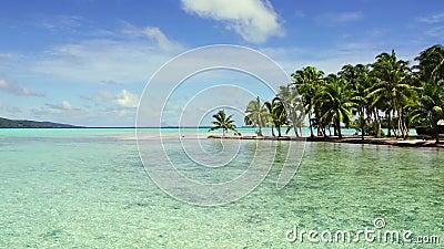 Spiaggia tropicale con le palme ed i lettini archivi video