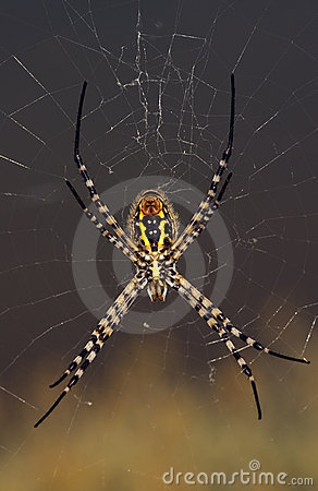 Free Spider Stock Photography - 10766702