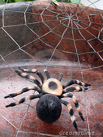 Free Spider Royalty Free Stock Images - 1156029