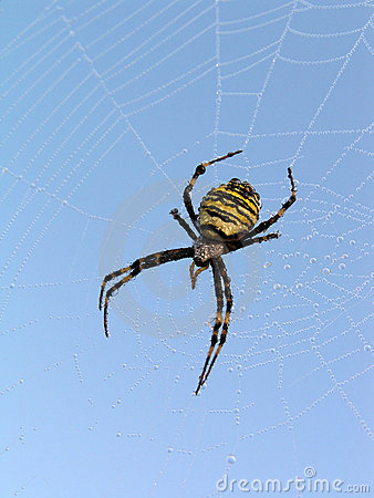 Free Spider. Stock Photography - 1354982