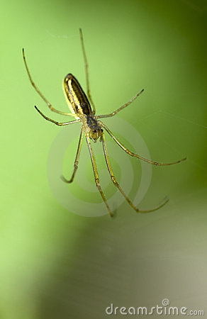 Free Spider Royalty Free Stock Image - 3288906
